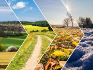 Krajobraz cztery pory roku - kolejno wiosna, lato, jesień, zima