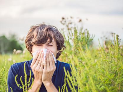 Młody mężczyzna, alergik kicha wśród wysokich, pylących traw