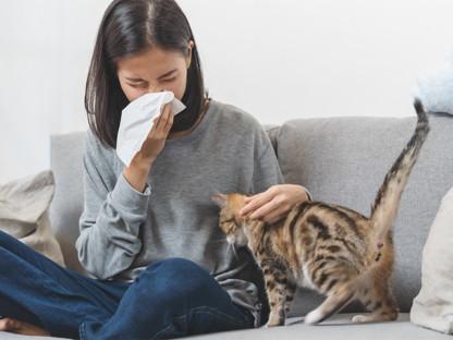 Młoda kobieta z kotem, kicha w chusteczkę, bo ma alergię na jego sierść.